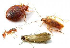 Средства от насекомых в квартире