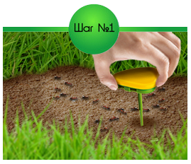 Разместите ловушки РАПТОР® в местах передвижения муравьёв на садовом участке.