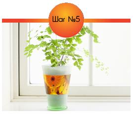 Для защиты от цветочных мушек расположите ленту вокруг кашпо.