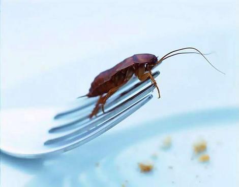 Тараканы – непрошеные гости в доме